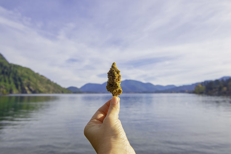Cropped hand holding cannabis plant against lake