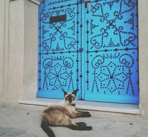 Caturday Cat Cats Cat♡ Catsofinstagram Cat Lovers Catoftheday Catsagram Caturday Catlovers Catlover