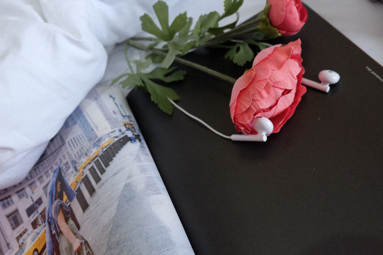 High angle view of rose on table
