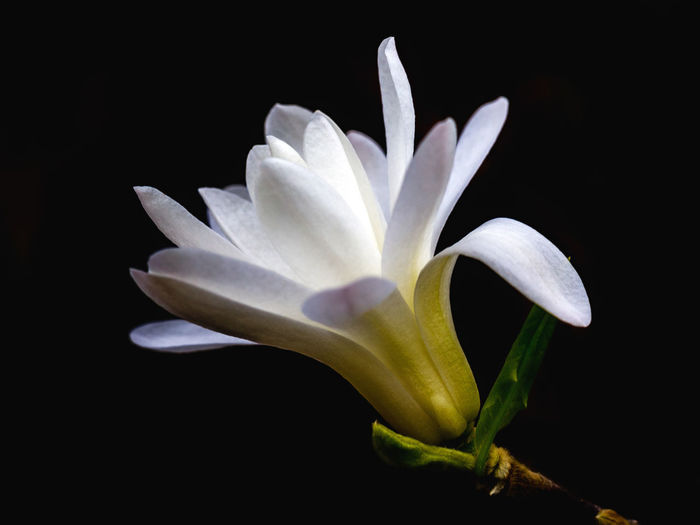 Close-up of flower against black background