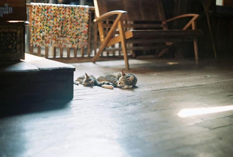 View of an animal on table at home