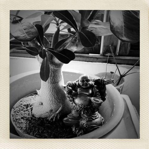 resting Resting Plant Life Budai Laughing Buddha
