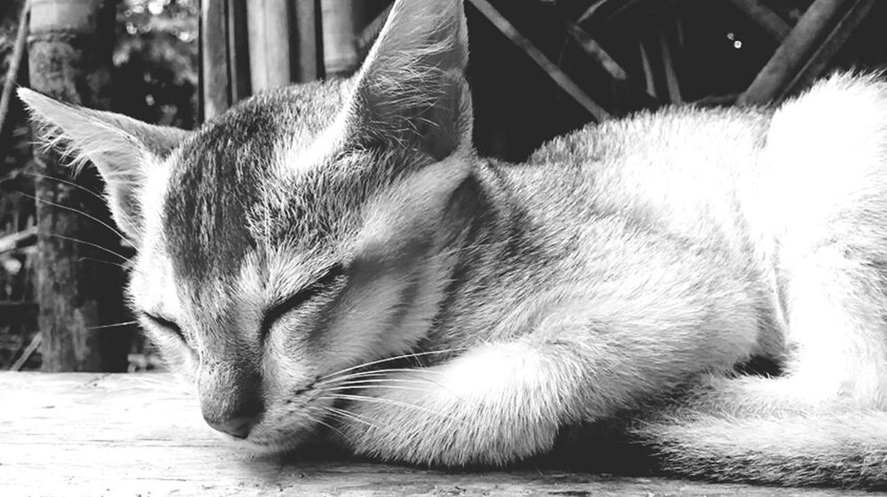 Sleeping is the best Workout .Pets Close-up Domestic Cat Blackandwhite