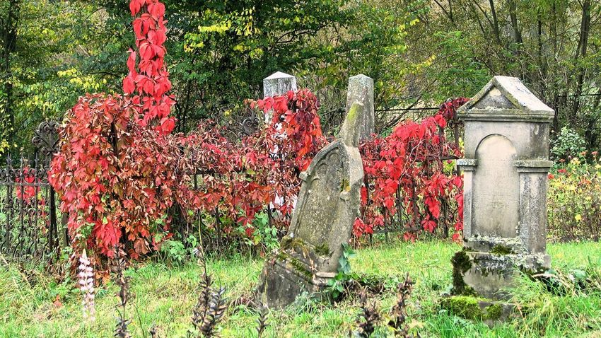 Autumn Autumn colors Cemetery Cemetery Photography Beauty In Nature Cemetery Day Flower Grass Gravestone Growth Nature No People Outdoors Plant Red Tombstones Tree