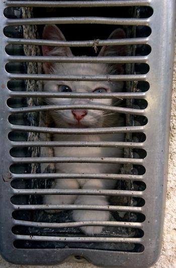 Portrait of cat in cage