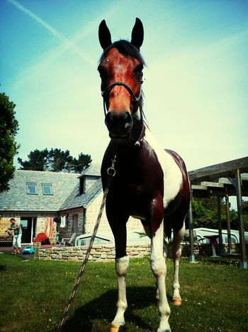 My Horse Horse Painthorse Photo