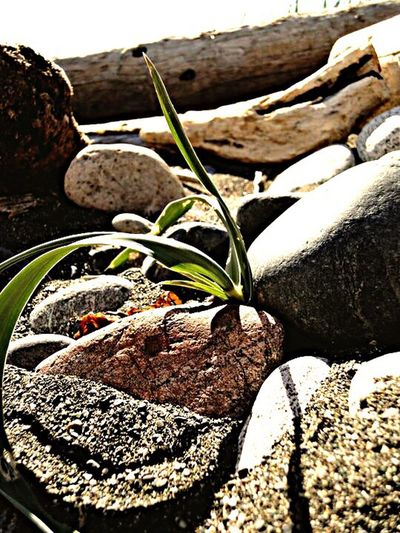 Close-up of fallen plant growing on rock