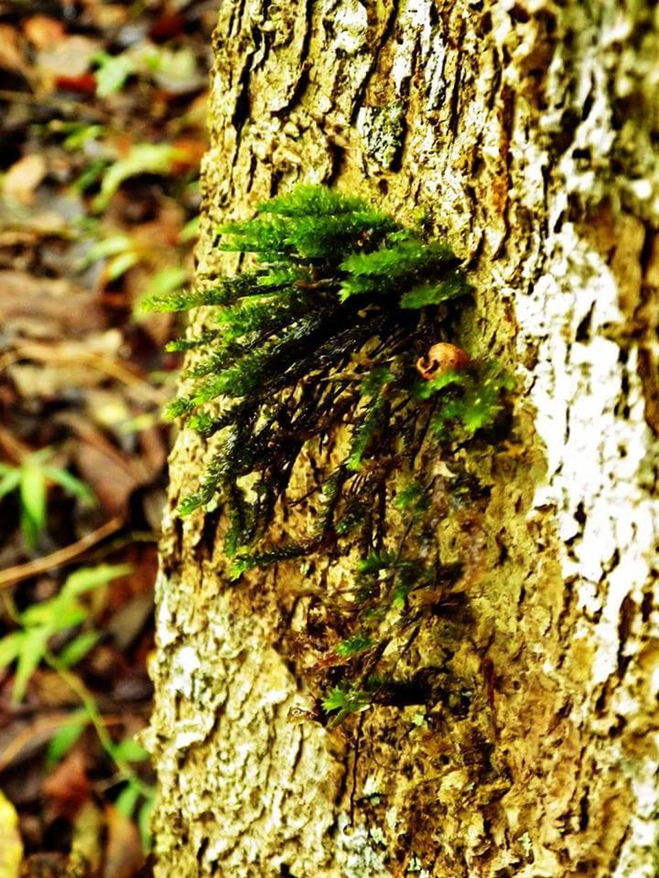 tree trunk, tree, textured, close-up, day, bark, nature, animal themes, rough, animals in the wild, no people, focus on foreground, outdoors, wood - material, one animal, animal wildlife, growth, fungus