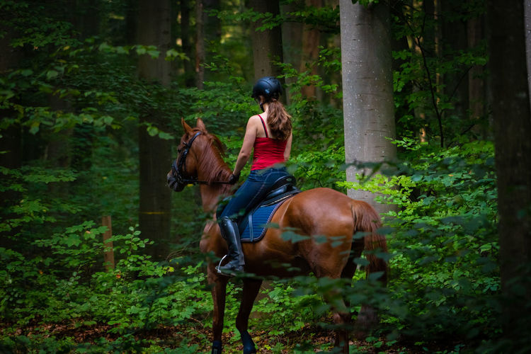 A young girl is riding a horse in the woods Mammal Plant Horse Domestic Domestic Animals Tree Real People Animal Themes One Person Livestock Animal Pets Riding Ride Land Leisure Activity Animal Wildlife Vertebrate Lifestyles Growth Outdoors Herbivorous