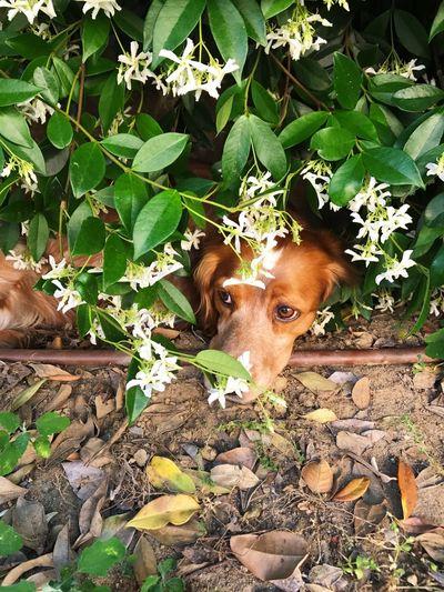 Whisky Epagneul Breton Leaf Plant Part Mammal One Animal Animal Themes Animal Vertebrate