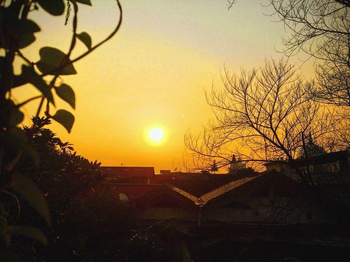 Goodbye Sun Sunset Sky Sun Tree Beauty In Nature Nature Plant Sunlight Orange Color Outdoors My Best Photo