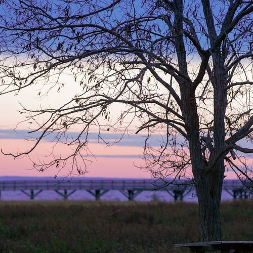 Fall Sunset EyeEm Selects Tree Branch Bare Tree Water Sunset Springtime Dawn Flower Tree Trunk Purple Single Tree Pastel Colored
