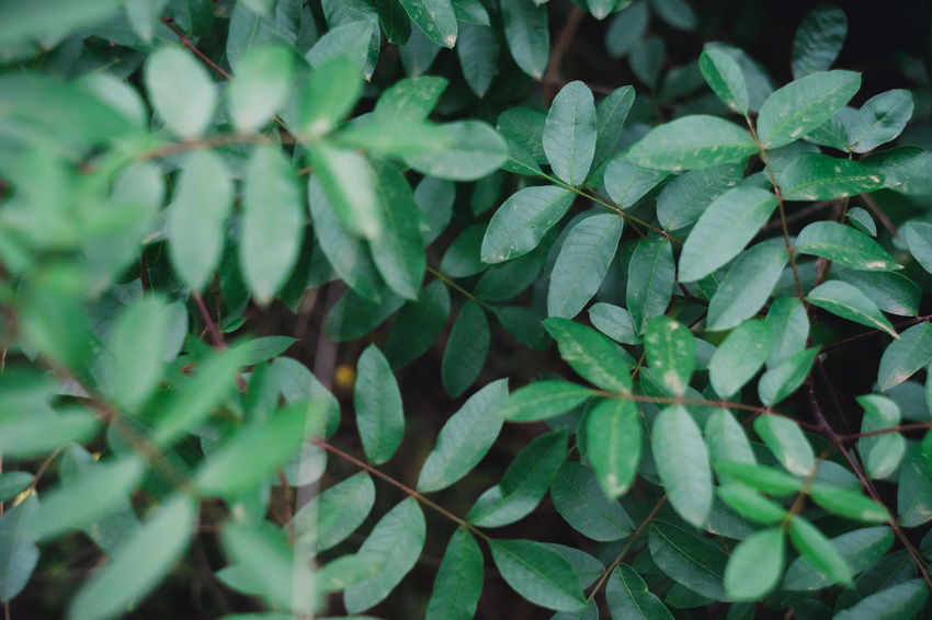 Backgrounds Beauty In Nature Close-up Clover Day Dew Freshness Full Frame Green Color Growth Herb High Angle View Leaf Leaves Nature No People Outdoors Plant Plant Part Selective Focus Tranquility Water Wet