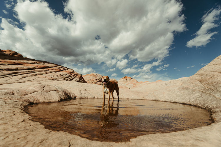 Horse standing in a water