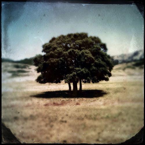 Sierra De Las Nieves Tree Hipstamatic EyeEm Nature Lover