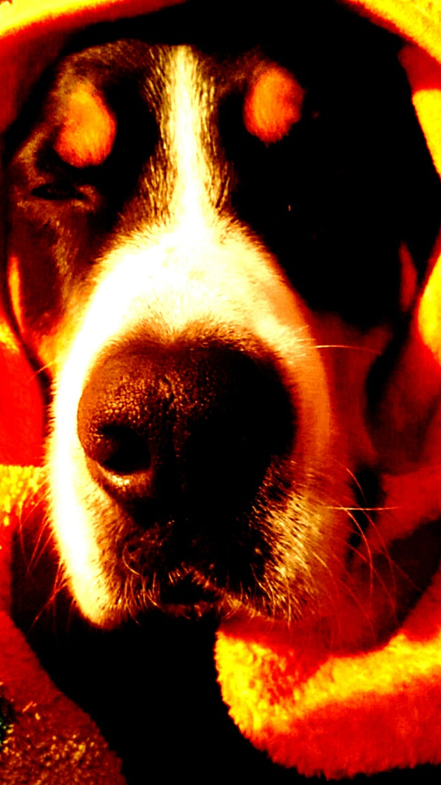 pets, one animal, domestic animals, animal themes, close-up, mammal, looking at camera, mouth open, no people, portrait, heat - temperature, dog, outdoors, day