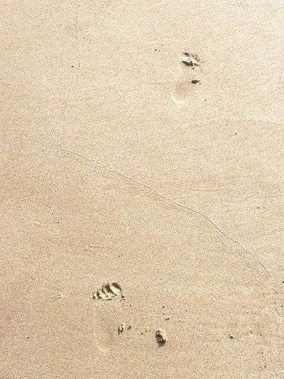 Impronta Orme Sand Beach Land High Angle View FootPrint No People Nature Animal Track