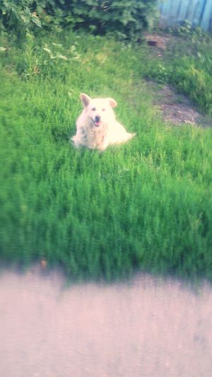 Beautiful Dog в Шаталовка