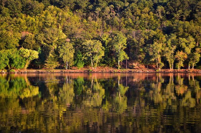 Reflection Tree Nature Lake Beauty In Nature Scenics Water Tranquility Forest Outdoors Tranquil Scene No People Growth Day The Week On EyeEm Perspectives On Nature Perspectives On Nature