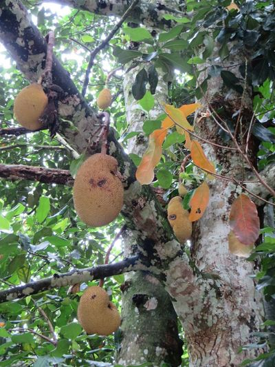 fruits Taking Photos Fruits Details Of Nature Tijuca's Forest