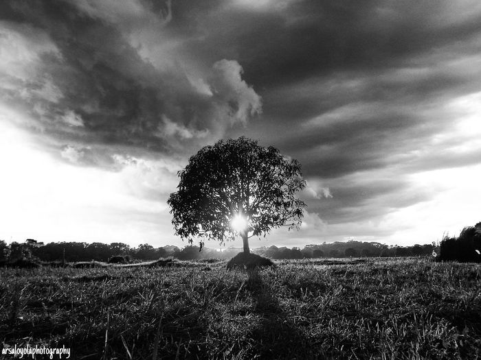 standing alone... Monochrome Black And White Black And White Photography Nature Lover Nature Photography Nature In Black And White Trees Philippines Photography The Week On EyeEm
