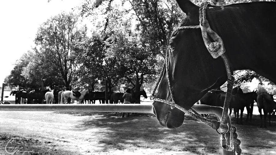 Horse Nature Poloteam Polohorse  Argentina Wildlife & Nature Germany Polosport Animals