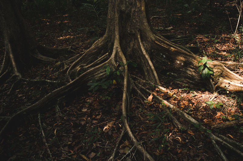 The Great Outdoors - 2018 EyeEm Awards The Still Life Photographer - 2018 EyeEm Awards Close-up Day Falling Forest Growth Land Leaf Leaves Nature No People Outdoors Plant Plant Part Root Tangled Tranquility Tree Tree Trunk Trunk Wood WoodLand