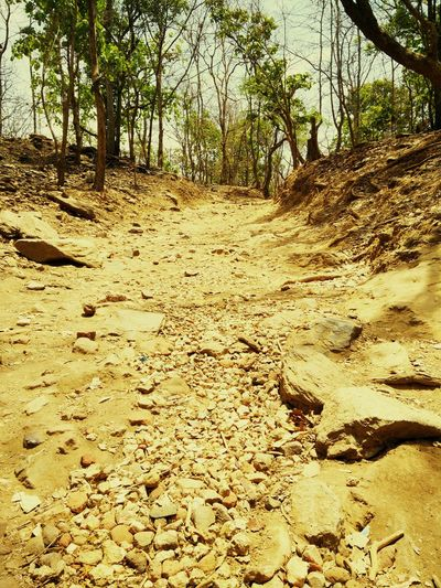 Dead river bed River River Bed Dry Riverbed Summer Hot Day Forest Dry Forest Summer Forest Heat Offroad good place for off roading Nature Outdoors