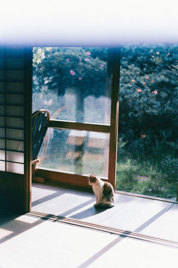 Dog seen through window
