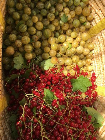 Erntezeit Ernte, Sommer2017☀️ Food Food And Drink Green Color Healthy Eating High Angle View No People Fruit Red Freshness Large Group Of Objects Day Leaf Outdoors Nature Close-up Stachelbeeren Johannisbeeren