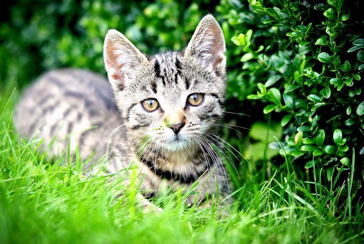 Cat♡ Puppy Cute