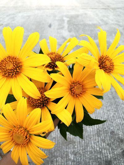 Yellow Sunflower Iphonephotography Nature