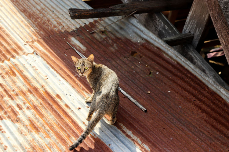 High angle view of cat sitting on wood