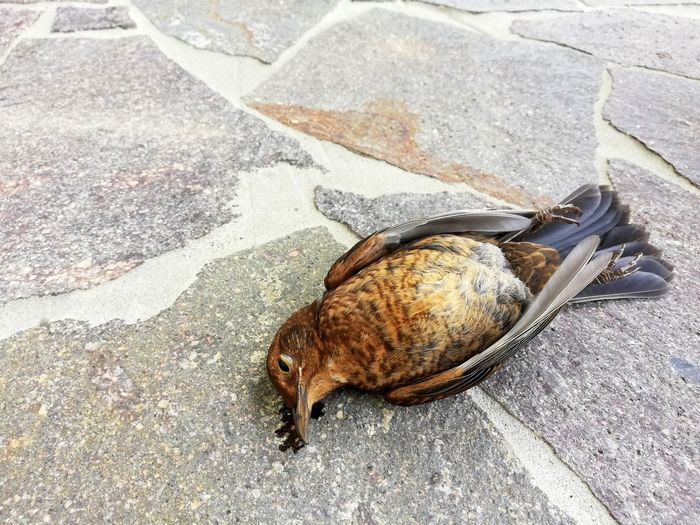 High angle view of crab on street