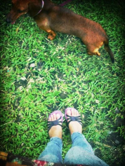 she who loves the grass Dacshund Doggyday Things That Are Green From Where I Stand