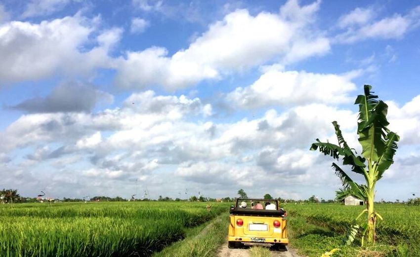 Blue Sky Rice Field Land Vehicle Landscape Bali, Indonesia