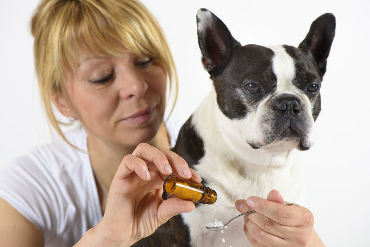 Boston terrier dog in examination of female veterinarian Domestic Pets Domestic Animals One Animal Mammal Canine Dog One Person Pet Owner Doctor  Vet  Veterinary Veterinarian Women Boston Terrier Animal Themes Medicine Medical Healing Care Therapy Ill Injury Female Doctor Examination