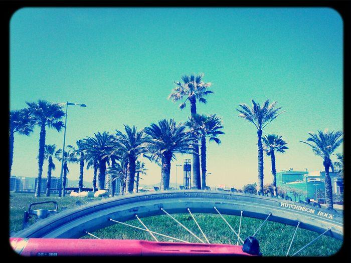 Random Walk Celebrate Your Ride Barcelona