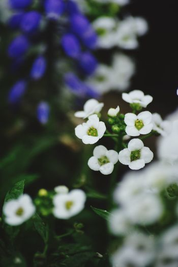 Flower Growth Beauty In Nature Nature Fragility White Color Freshness Petal Close-up Plant Outdoors Blooming Day No People Flower Head I Want To Know Your Secret, C I Always Thinking About U, G Thank You,❤️ Thankyou 감사합니다