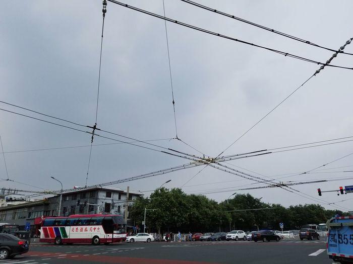 net Bird Flying