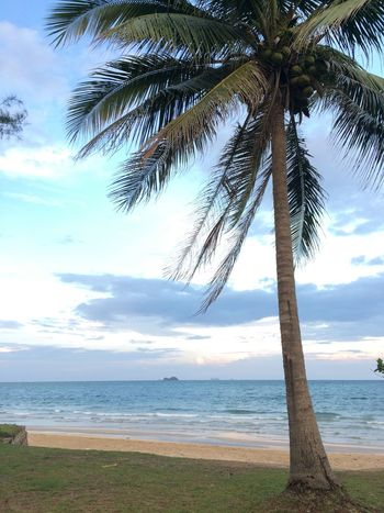 Coconut Tree & Sea Sea Beach Tree Horizon Over Water Beauty In Nature Sky Nature Outdoors Sand No People Day Cloud - Sky