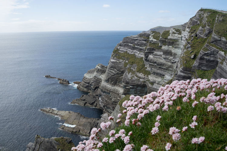 Beauty In Nature Cliff Cliff Of Kerry Day Dingle Dingle Peninsula Flower Horizon Over Water Idyllic Ireland Kerry Nature No People Outdoors Ring Of Kerry Rock - Object Scenics Sea Sky Tranquil Scene Tranquility Water Wild Atlantic Way