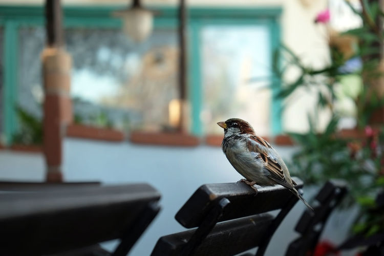 Close-up of bird perching on chair