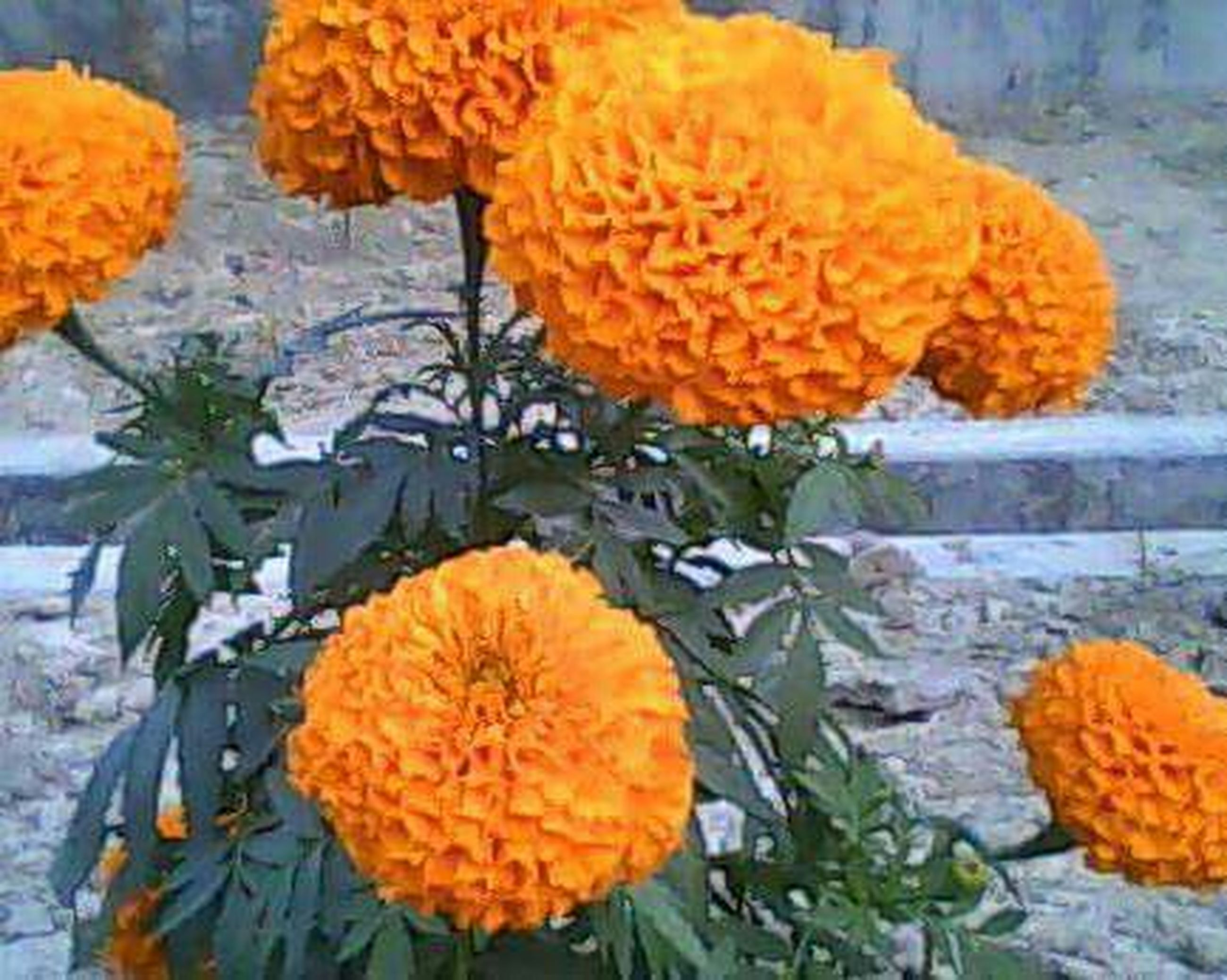 orange color, freshness, yellow, fragility, autumn, pumpkin, close-up, season, nature, flower, growth, beauty in nature, change, vegetable, orange, plant, day, outdoors, flower head, high angle view