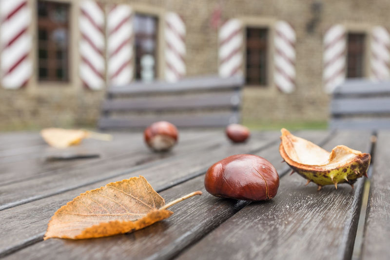 Close-up of chestnuts and leaf on bench
