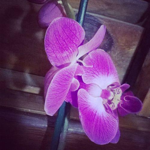 Ganhei flores e me senti especial! 😍 emocionei !! Flowers Orquídea Orquidearoxa Beautiful presente supresa