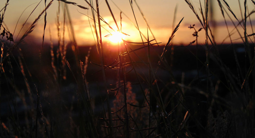 Good night and good morning :) <3 Beauty In Nature City Sunset Close-up EyeEm Nature Lover Grass Nature No People Outdoors Plant Sun Sunset Tranquil Scene
