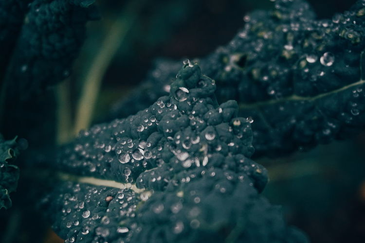 Close-up of raindrops on leaves during rainy season
