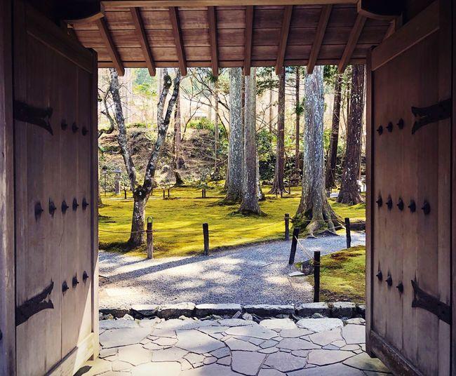 三千院 大原 Kyoto,japan Travel Destinations Tranquil Scene Tranquility Japan Photography Architecture Built Structure Day Building Plant Indoors  No People Nature Sunlight Protection Architectural Column