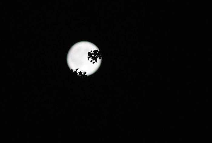 Moon Silhouette Black Background Circle Dark Full Moon Leaves Moon Moon Silhouette Night Getty Images Getty & Eyeem Getty & EyeEm Collection